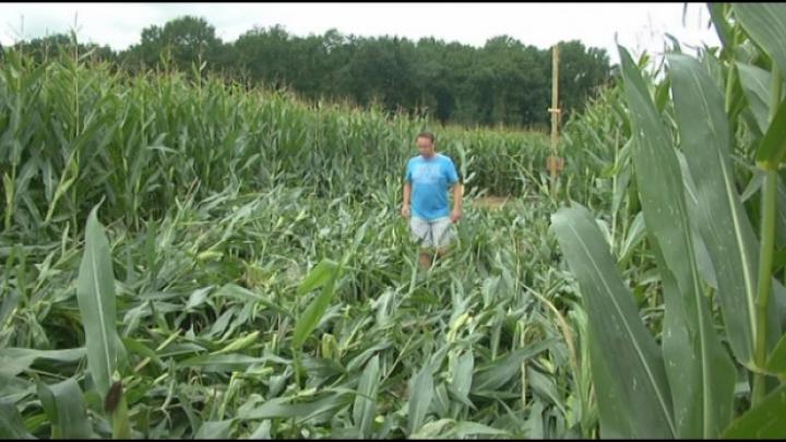 Vandalen vernielen maïsdoolhof