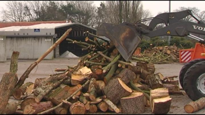 Vosselaar verkoopt snoeihout van januaristorm