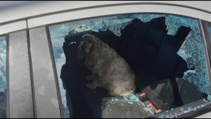 Omstaanders bevrijden hond uit auto in Westerlo