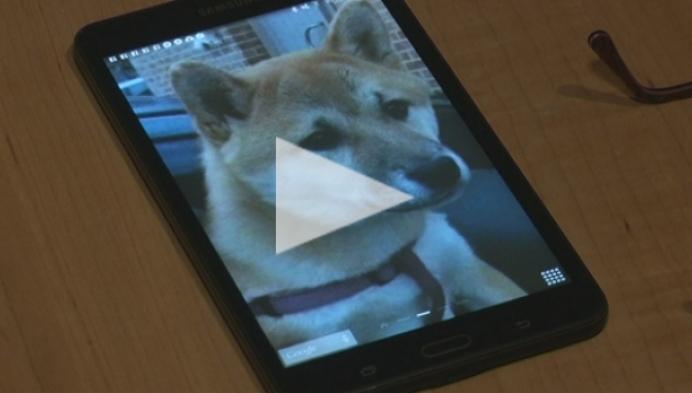 4 vermiste honden uitgevoerd naar Oostlbok door broodfokker?