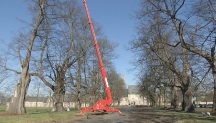 Veteranenbomen abdij van Tongerlo krijgen snoeibeurt