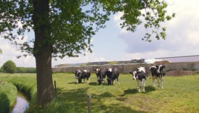 Achter de schermen kijken bij melkveehouders