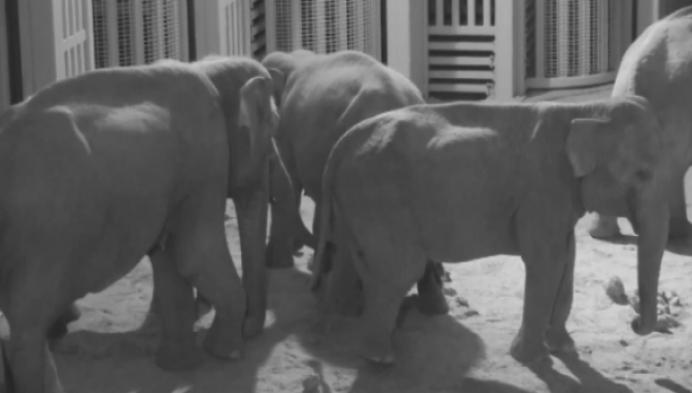 Planckendael rouwt om dood olifantbaby Q