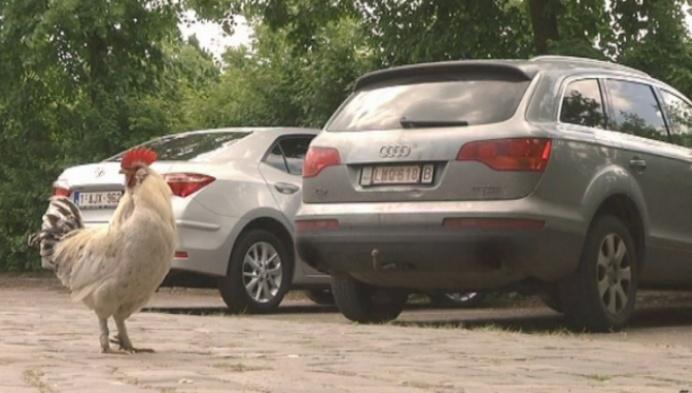 Betalend parkeren abdij Postel stoot op protest