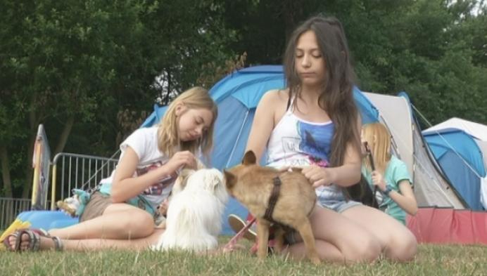 'Dog het keffertje' organiseert hondenkamp