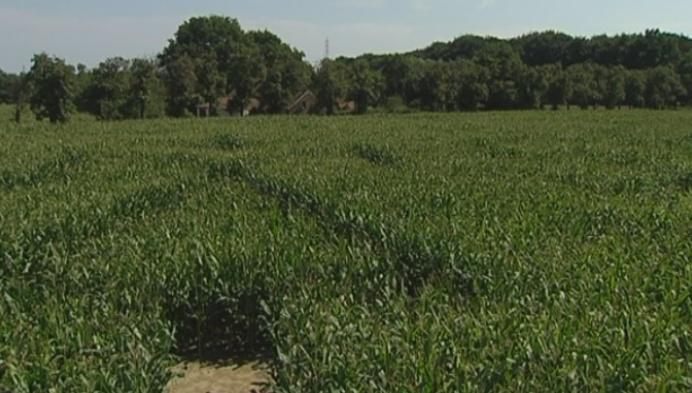 Kempens Landschap opent nieuw maïsdoolhof