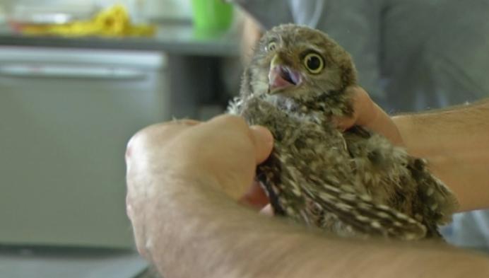 Vogelopvangcentrum Neteland stelt nieuwe accomodatie voor
