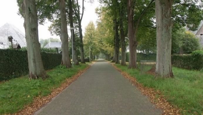 Oud-Turnhout rooit lindebomen uit voorzorg