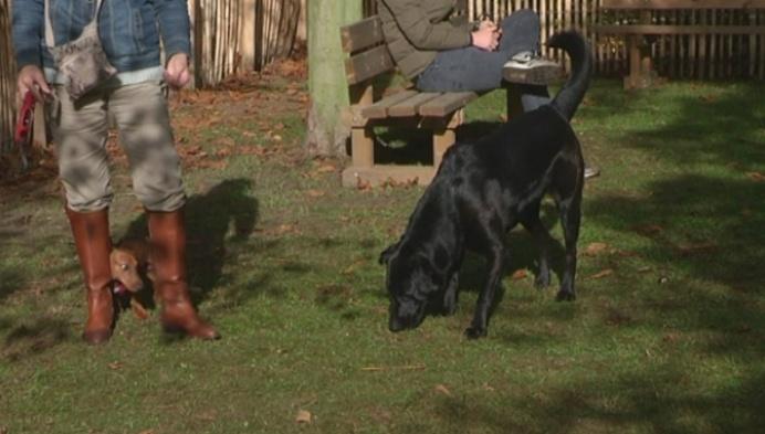 Tivolipark heeft hondenspeeltuin en binnenkort taverne