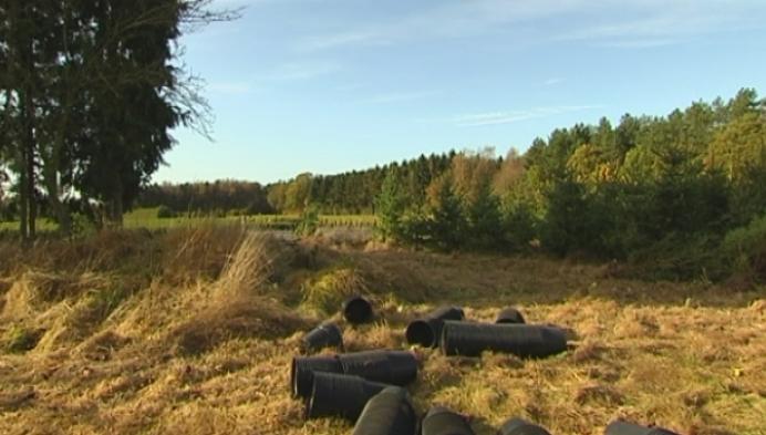 800 buxusplanten gestolen uit kwekerij