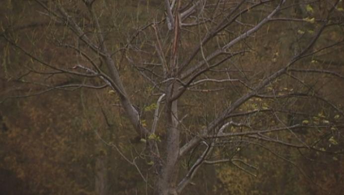 4500 nieuwe bomen voor Waverwoud