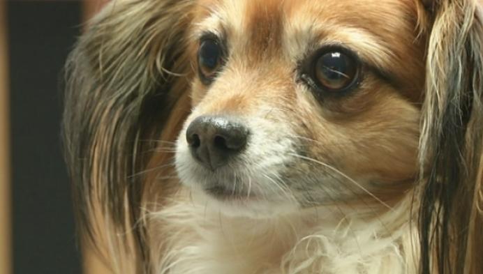 Huisdieren krijgen minder vaccins