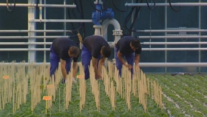 Burende Boeren moet relatie tussen boer en buurt versterken
