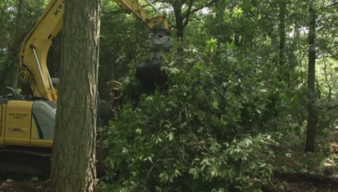 Natuurpunt werkt bossen Den Rooy uit tot natuurgebied