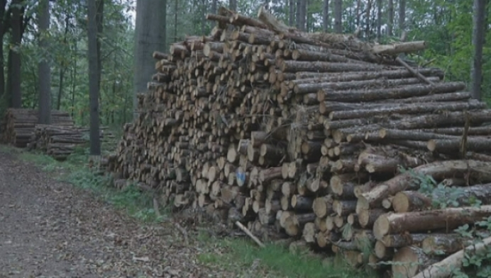 Bomenkap in bossen Herselt baart mensen zorgen