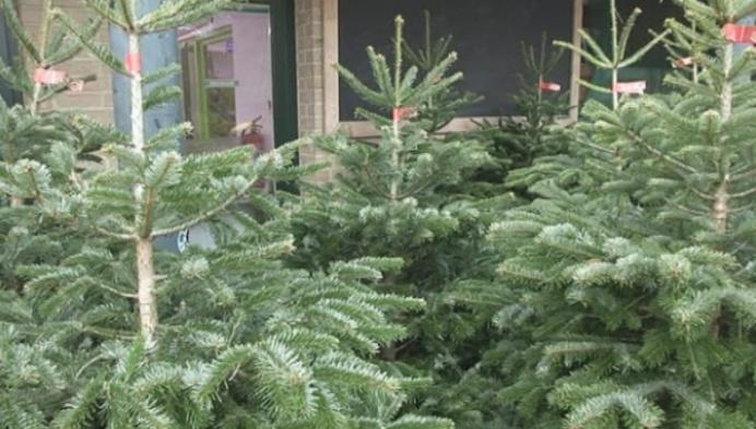 Wat met niet verkochte kerstbomen in Duffel?