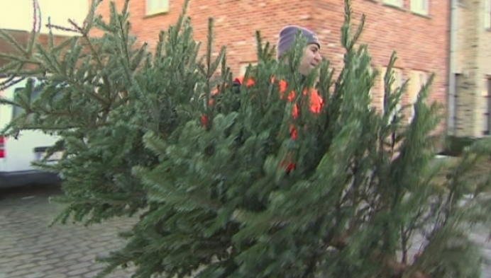 Driekoningen nog niet gepasseerd, maar kerstbomen weg in Duffel