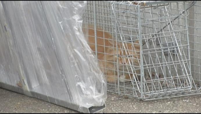 Katje dreigt vast te zitten zonder eten of drinken, maar dan is er de politie...
