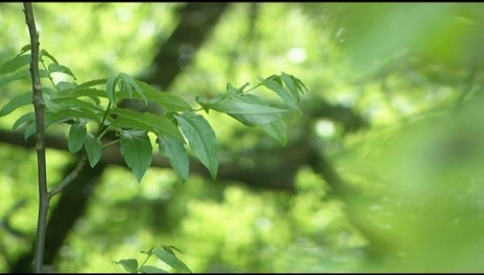 SP.A wil geen weg meer door bos Spreeuwenhoek