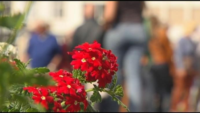 Terug bloemenmarkt na sabbatjaar