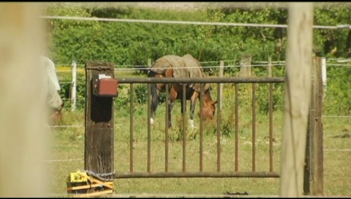 Politie pakt dief met interesse in paardensport