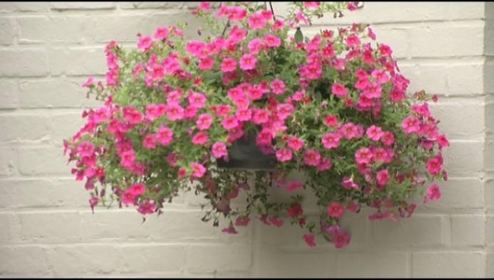 Bloemen in voortuinen blijven verdwijnen