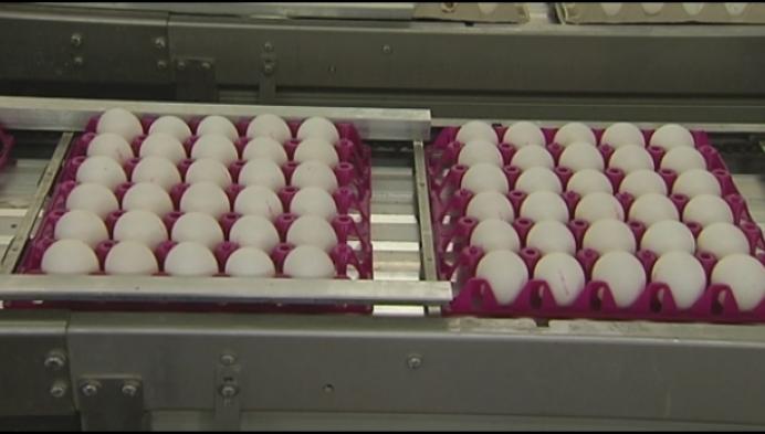 Proefbedrijf in Geel: 'Bloedluizen bij kippen zijn hardnekkig'