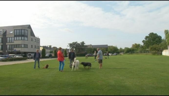 Hondenlosloopzone in Willebroek komt er snel