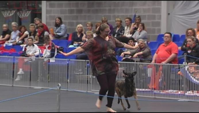 Wie kan het beste met zijn hond dansen?