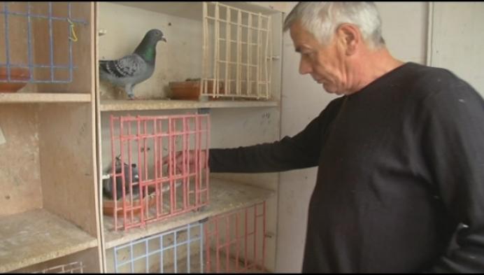 400.000 euro voor Nijlense duif Nadine