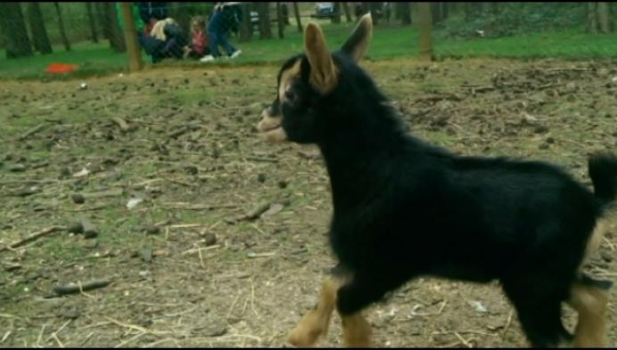 Jong geitje gestolen uit kinderboerderij De Brink
