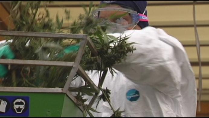 Gerecht rolt grote cannabisplantage in Olen op.