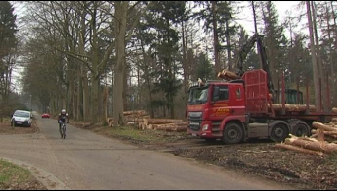 Bezorgdheid over grote bomenkap