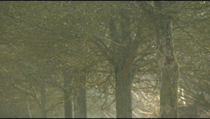Zieke bomen in Tongelse wijk worden gekapt