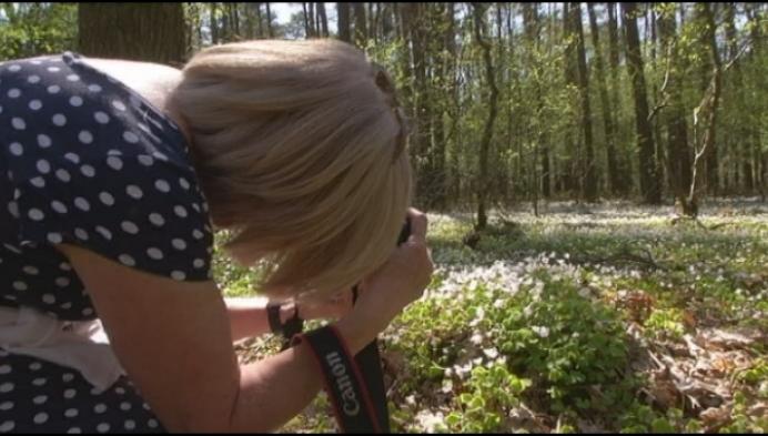 Mooi wit bloementapijt in Lichtaarts bos