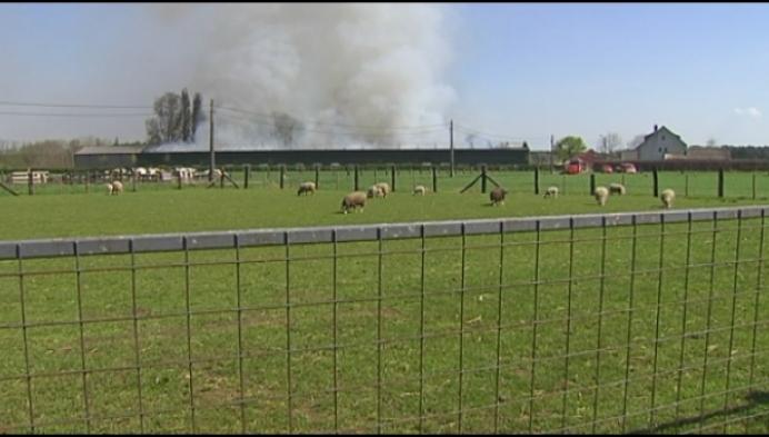 70.000 kippen komen om bij stalbrand