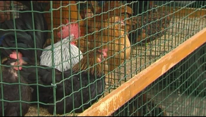 Meningen over toekomst dierenmarkt verdeeld