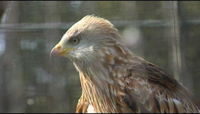 Heist-op-den-berg steunt opstart van dierenambulance