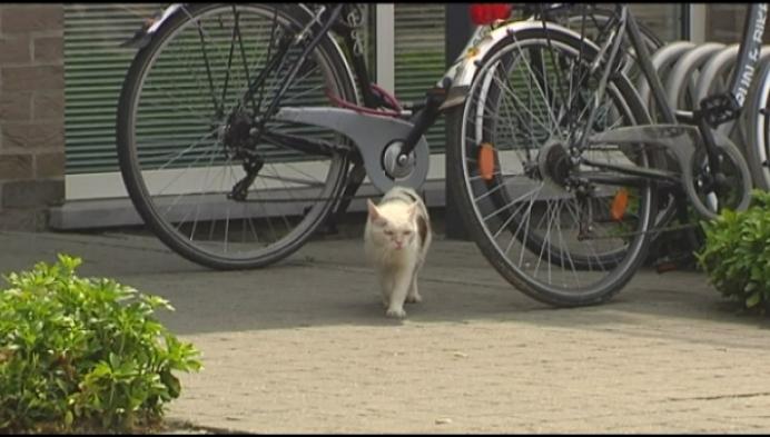 Kritiek op zwerfkattenbeleid in Hulshout