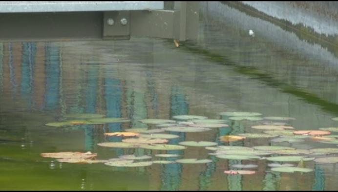 Warm weer zorgt voor algen in Mechelse vlietjes
