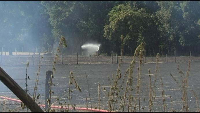 Grote vegetatiebrand in Balen: 1 woning kort ontruimd