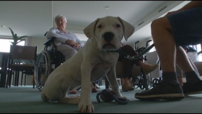 Therapiehond Stanske zorgt voor thuisgevoel in WZC Het Paradijs in Lier