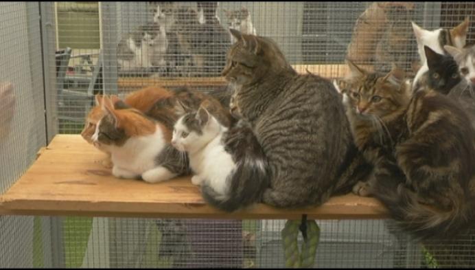 Verwaarloosde katten gevonden in Westerlo