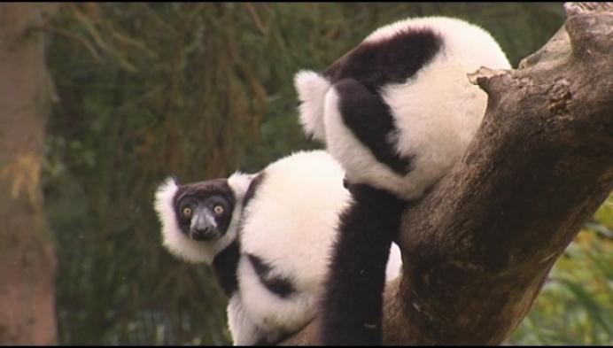 Olmense Zoo werkt aan toekomst