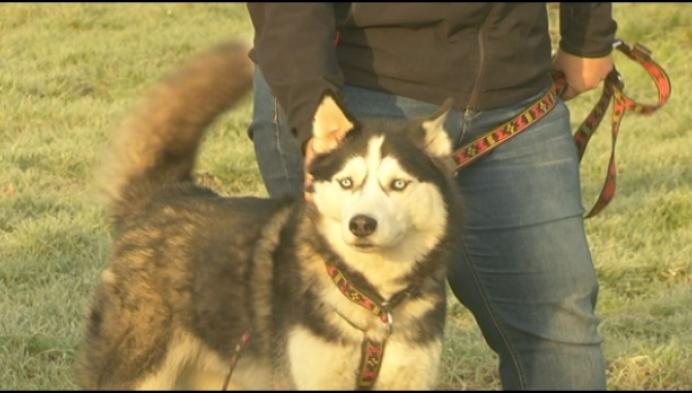 Hondenspeelweide in Arendonk