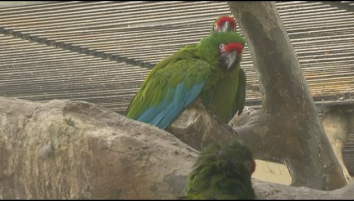 Heists bedrijf maakt nieuwe volière voor Zoo