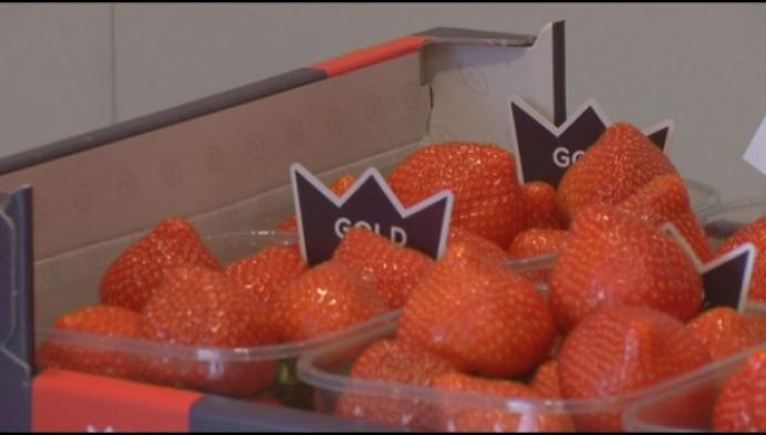 Eerste Hoogstraatse aardbeien leveren 8000 euro op