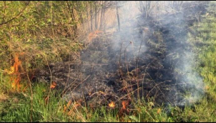 Grasbrandjes in Gestel en Hallaar door droogte