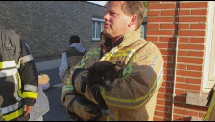 Brandweerman reanimeert kat na keukenbrand