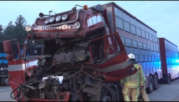Hinder op E34 door ongeval met vrachtwagen met varkens